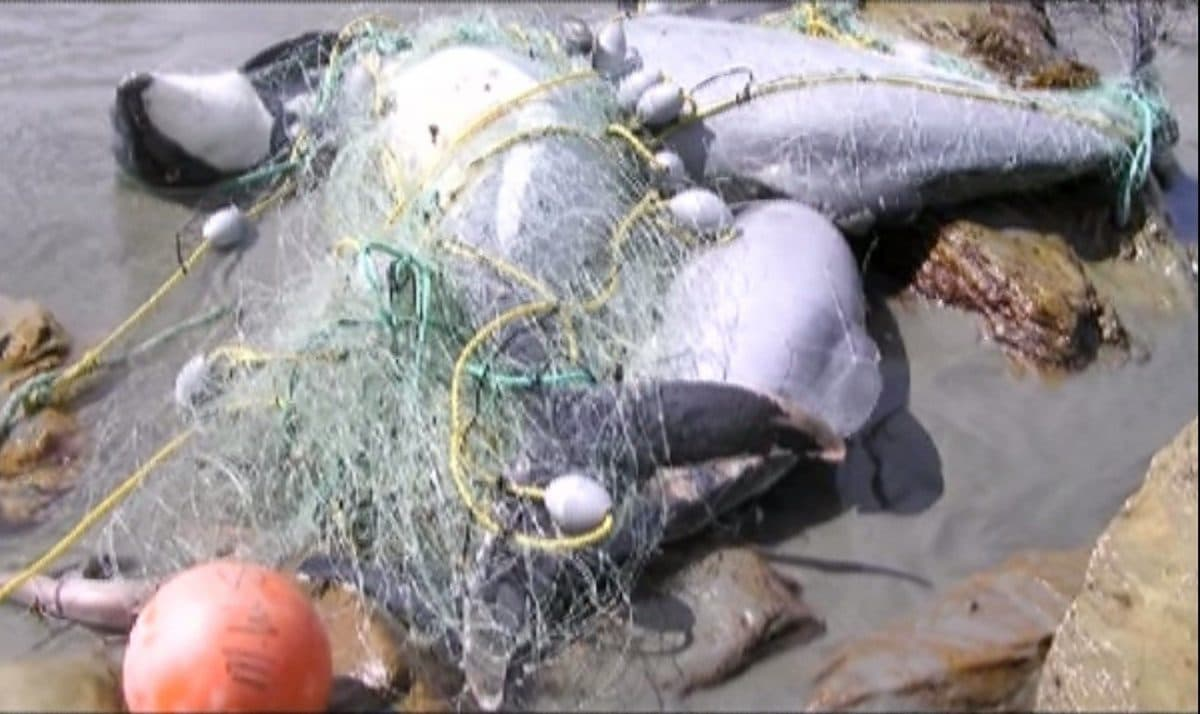 Socken aus altem Fischernetz von Teko