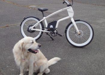 YouMo Cruiser e-Bike Test Cool mit Hund