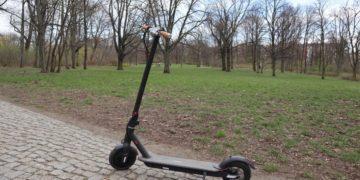 IO Hawk Sparrow im Park